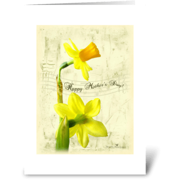 Daffodils for Mother's Day greeting card