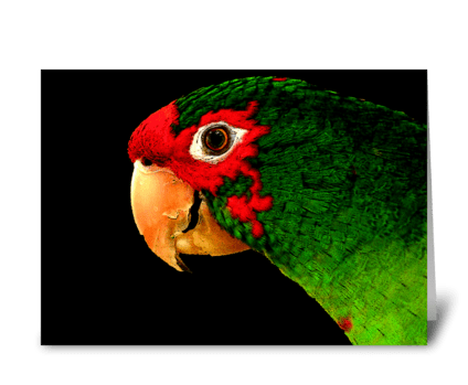 Talk Like a Parrot greeting card
