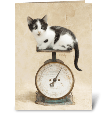 Kitten Weighs Birthday Wishes greeting card