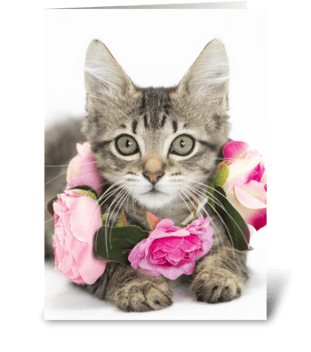 I Love Lucy Kitten greeting card