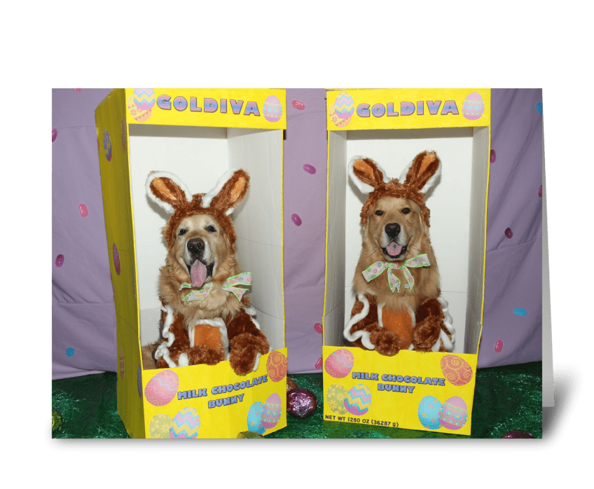 Golden Retriever Chocolate Bunny Easter greeting card