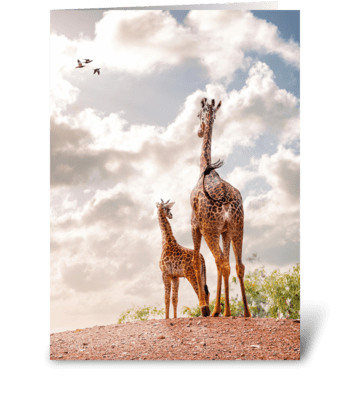 Mother Giraffe and Calf Together greeting card