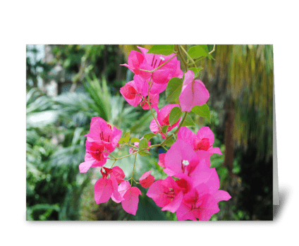 Pretty in Pink greeting card