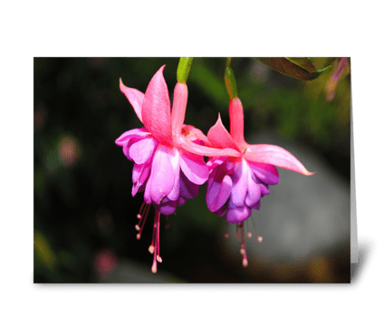 Fuchsias greeting card