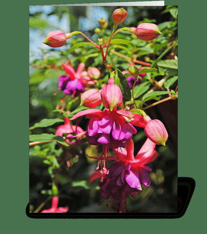 Fuchsia Blooms greeting card