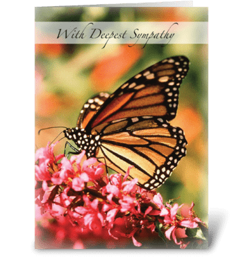 Monarch Butterfly, Pink Flower Sympathy greeting card