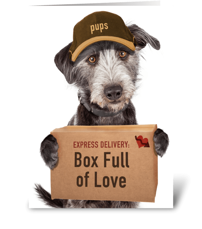 Express Delivery Box Of Love From Dog greeting card