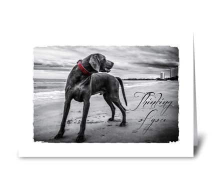 Dog sympathy card greeting card
