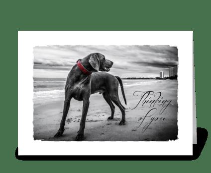 Dog sympathy card greeting card