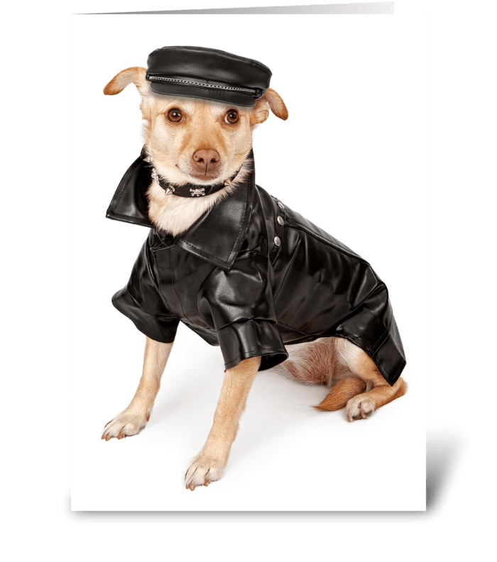 Funny Apology With Biker Dog greeting card