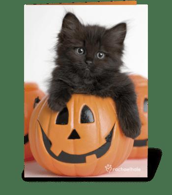Kitty in Pumpkin greeting card