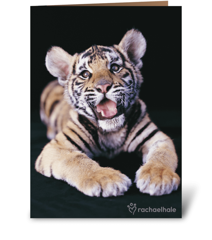 Happy Birthday Tiger greeting card
