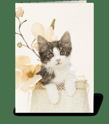 Kitten in Bloom greeting card