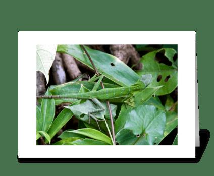 Borneo Chameleon. greeting card