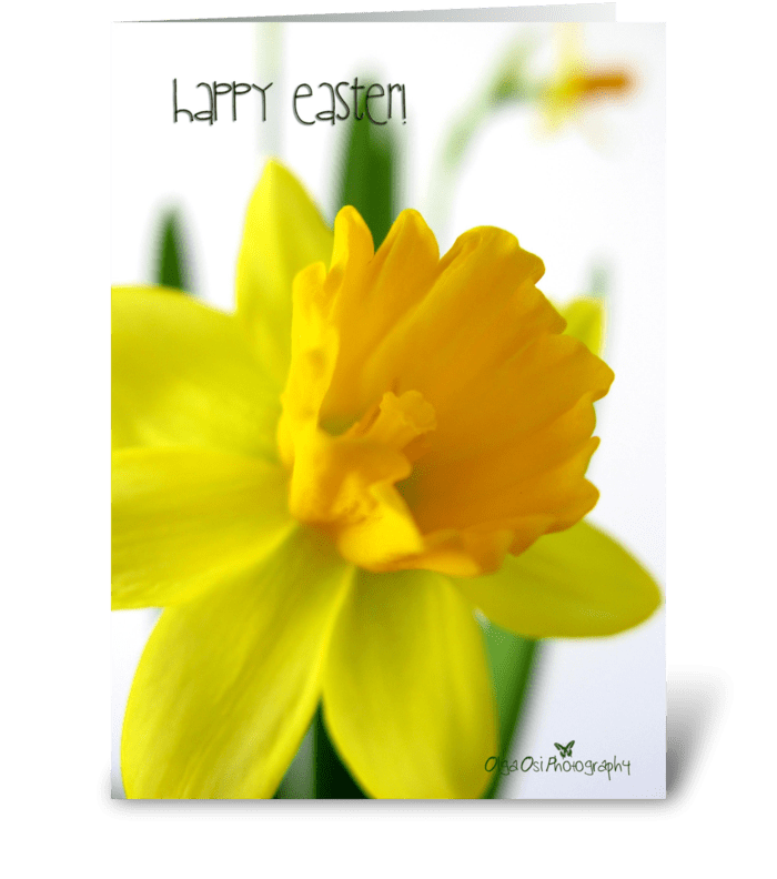 Daffodil flower for Easter greeting card
