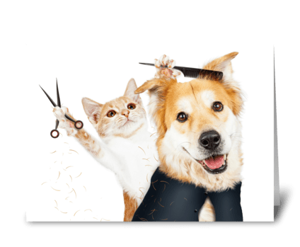 Funny Cat Grooming Dog Card greeting card