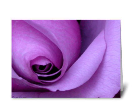 "Purple Rose ""I'm so sorry."" greeting card"