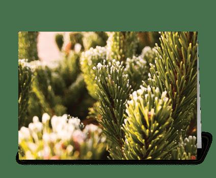 Seasons: Early Winter greeting card
