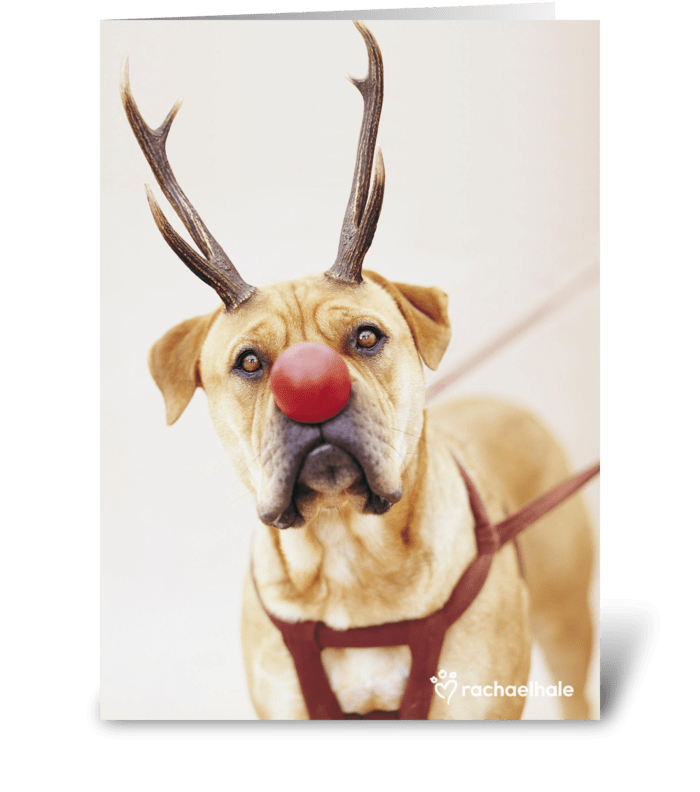 A Red Nose Will Get You Everywhere greeting card