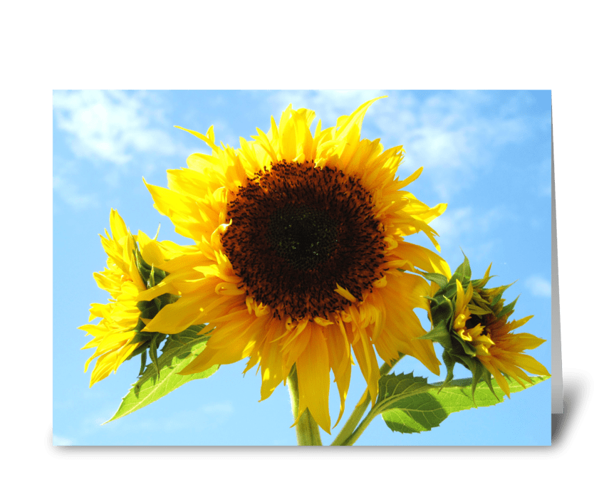 Cheerful Sunflowers greeting card