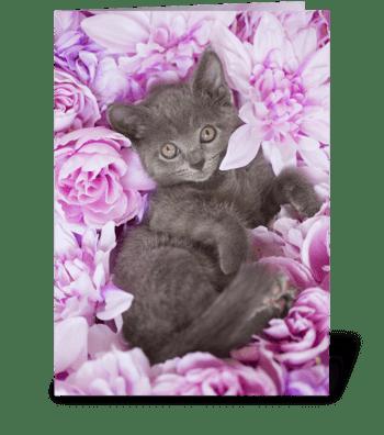 Purple kitten flowers blank inside greeting card
