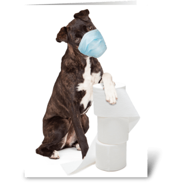 Funny Dog Get Well Card greeting card