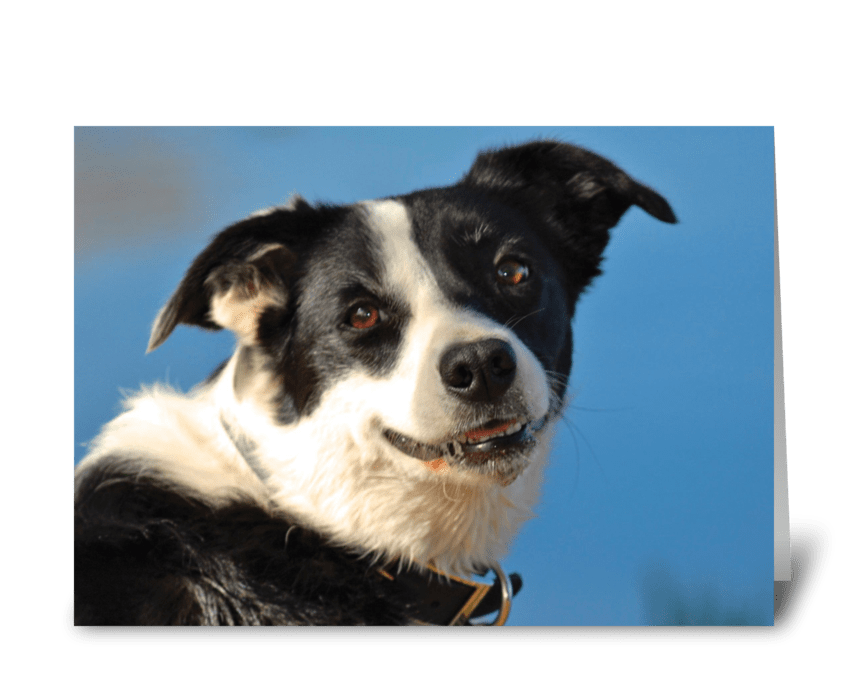 Dog Days greeting card