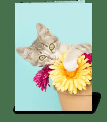 Silly kitten in Flower Pot greeting card