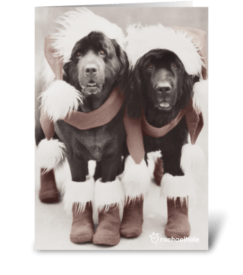 It's the Silly Season! greeting card