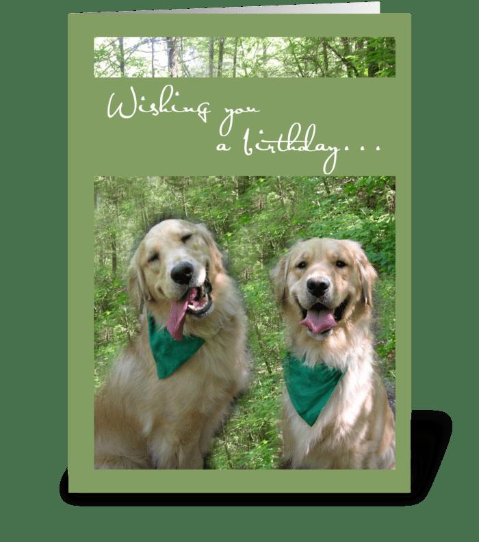 Golden Retrievers, Birthday greeting card