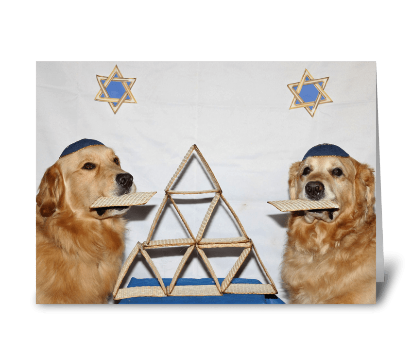 Golden Retriever Matzoh Passover Card greeting card