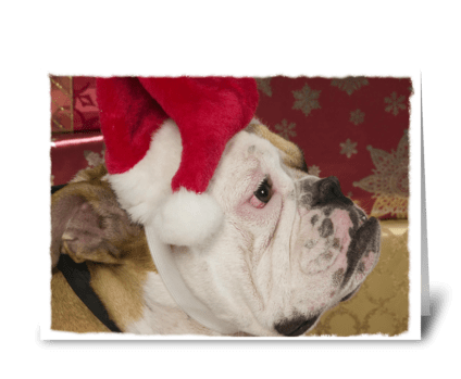 English Bulldog Not Merry greeting card