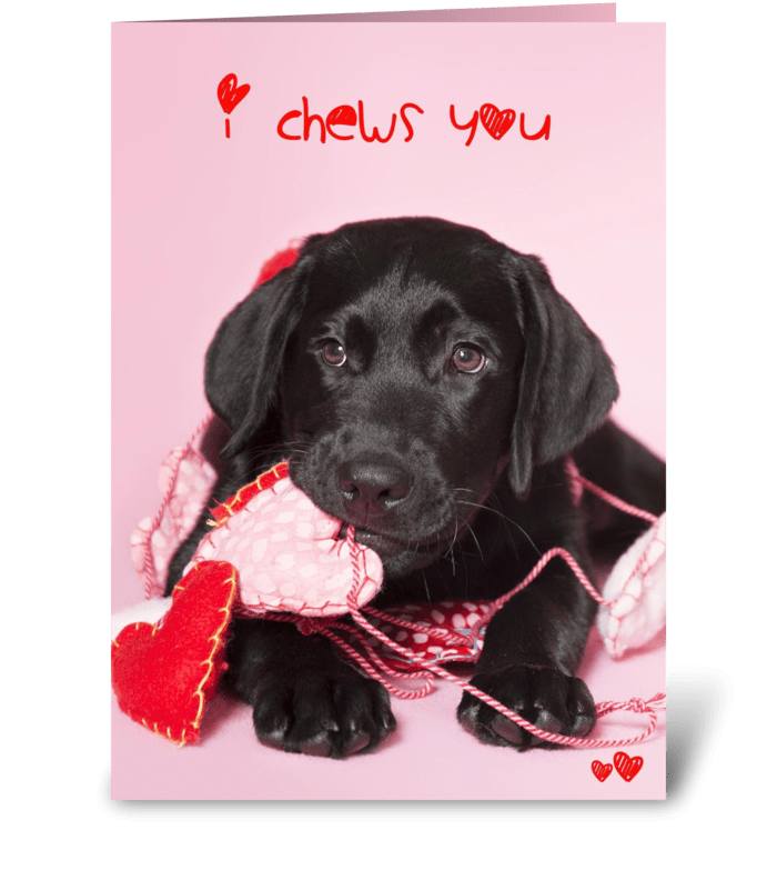 I Chews You Valentine Puppy greeting card