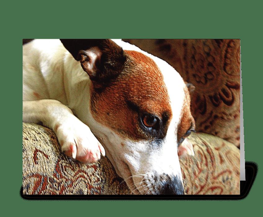 Doggone It! greeting card