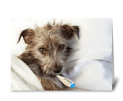 Cute Sick Dog in Bed greeting card
