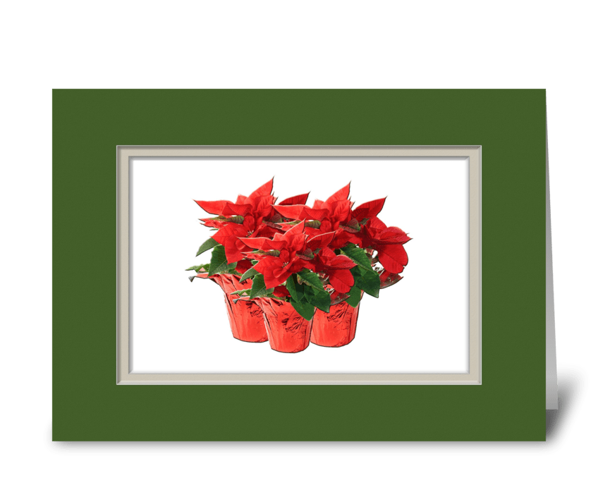 Red Poinsettia Plants  greeting card