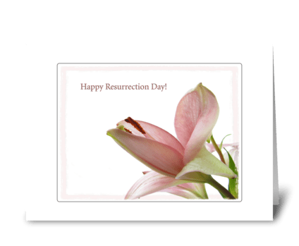 Framed lily greeting card