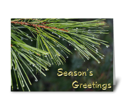 Evergreen, Dew Drops, Season's Greetings greeting card
