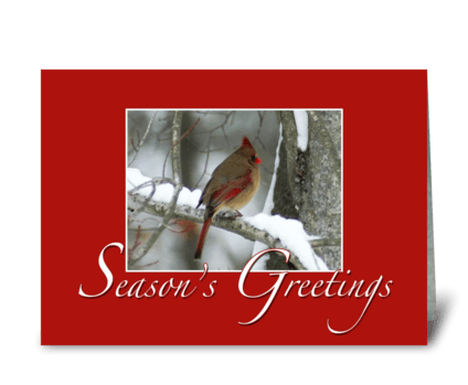 Redbird Season's Greetings greeting card