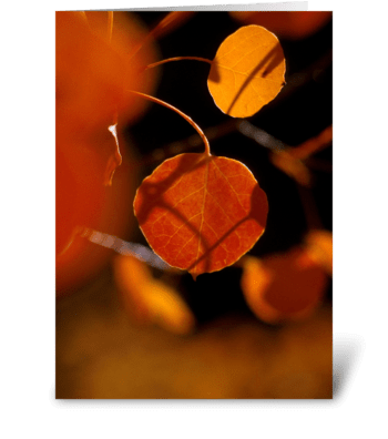 Fall Delight greeting card