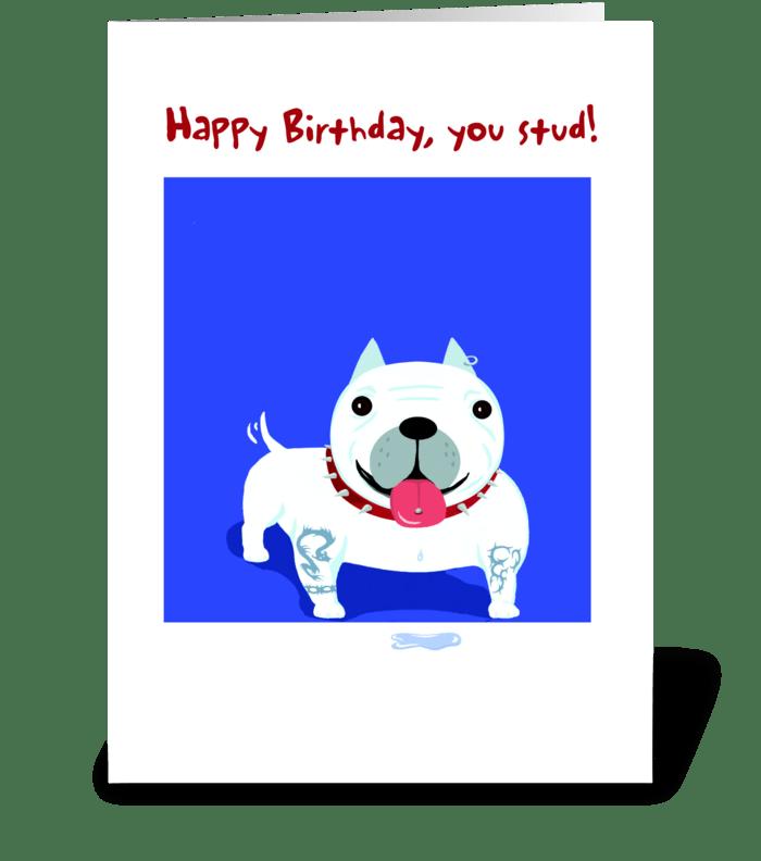 Bull Dog Stud Birthday greeting card