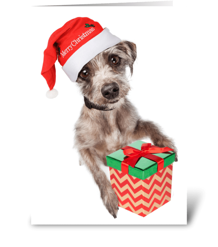 Cute Dog Delivering Christmas Gift greeting card