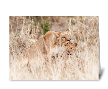Mother Lion Caring For Cub Mothers Day greeting card