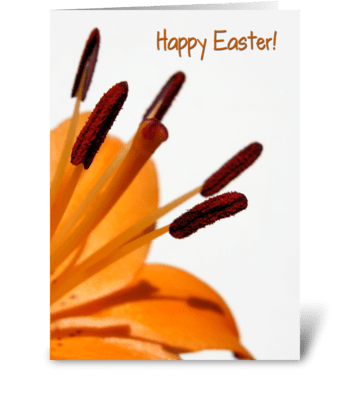 Orange Lily for Easter greeting card
