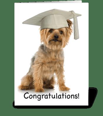 Graduation Yorkie with Cap Congrats greeting card