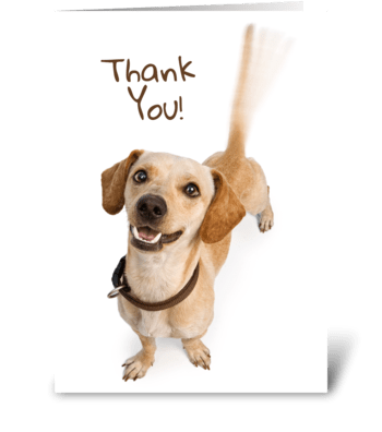 Tail Wagging Thank You greeting card