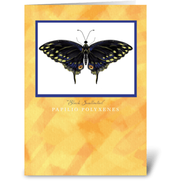 Black Swallowtail Butterfly Greeting Car greeting card