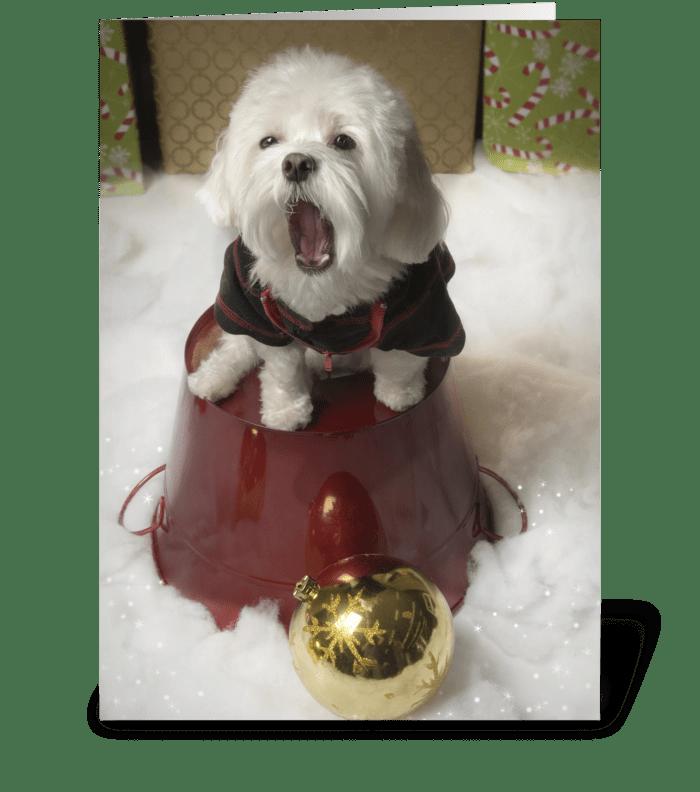 Bored Dog - Holidays greeting card