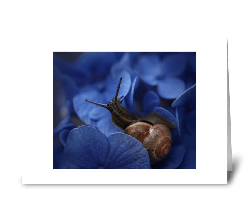 Snail on hydrangea greeting card
