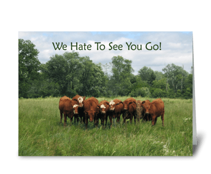 Cows Farewell from Group  greeting card